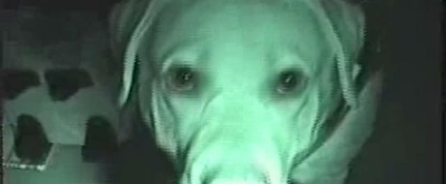 dogparanormal